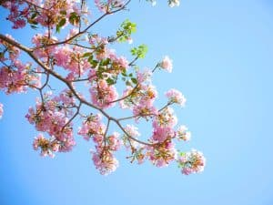 blossom-day